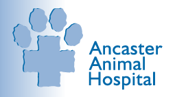 Ancaster Animal Hospital