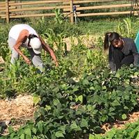 AIB Community Garden